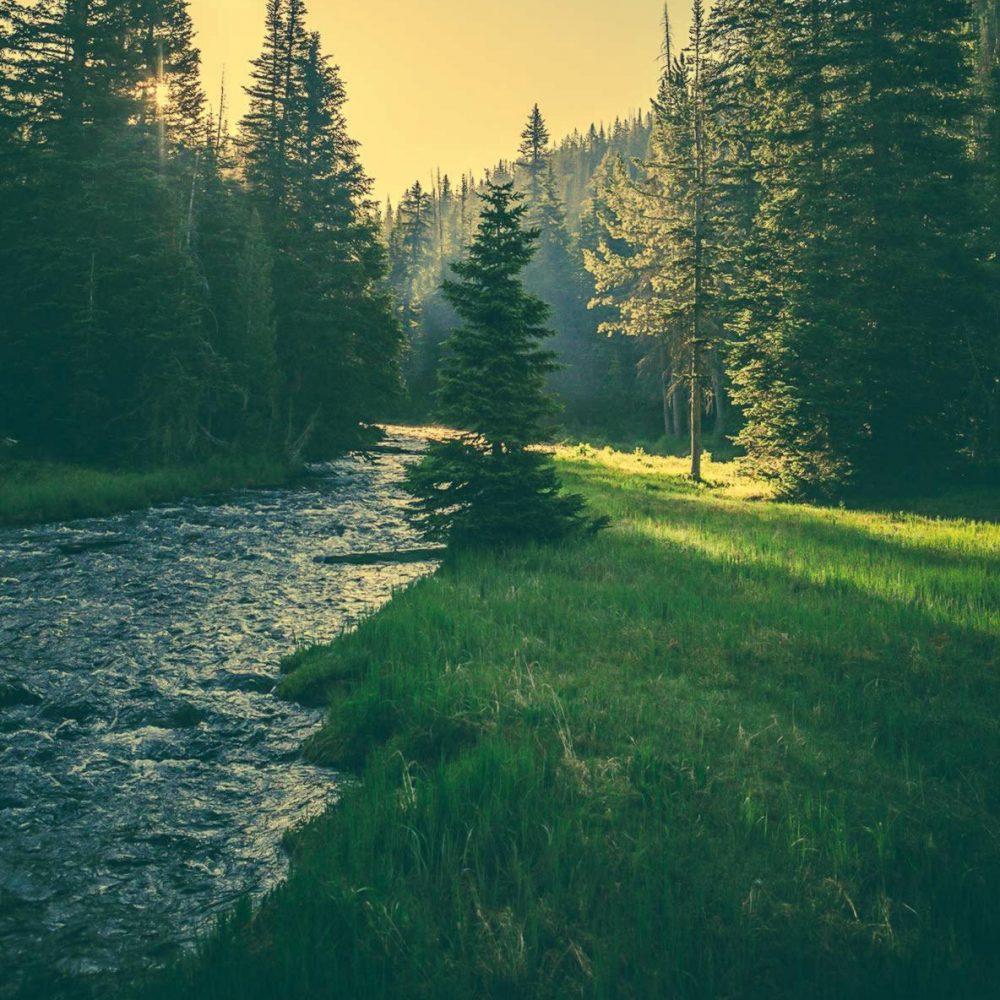 home_eco_wrapbg1-forest